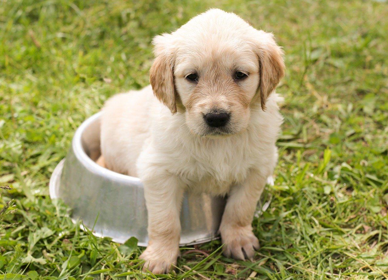 Cuidados De Los Cachorros Recién Nacidos Animal Home